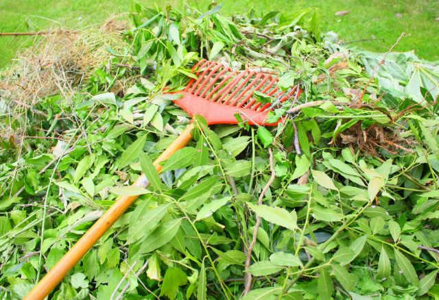 Débroussaillage, taille des haies et des arbres, et interdiction du brûlage des déchets verts à l'air libre